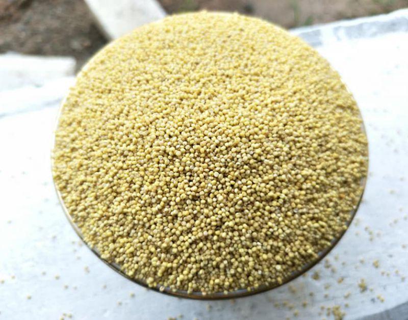 Hạt kê và các món ăn bổ dưỡng từ hạt kê