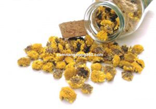 trà hoa cúc vàng hà nội