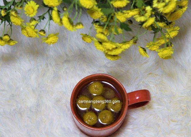 loại hoa cúc làm trà