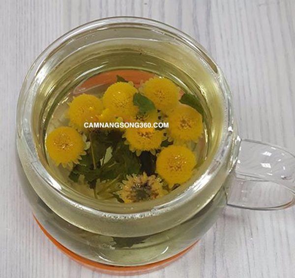 Trà hoa cúc hà nội